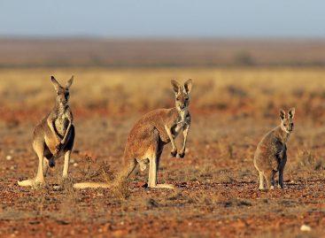 How Did Marsupials Evolve?